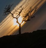 Black Mountain tree Royalty Free Stock Image