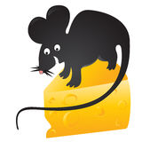 Black mouse found cheese Stock Photo