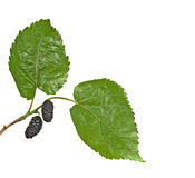 Black Mulberries Stock Photography