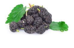 Black mulberry Stock Photos