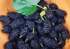 Black mulberry Royalty Free Stock Images