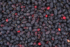 Black mulberry as a background Royalty Free Stock Photos