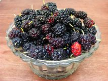 Fresh black mulberry in crystal bowl. Close up royalty free stock image