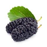 Black mulberry. Fruit closeup isolated on white royalty free stock photo