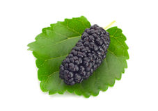 Black mulberry Royalty Free Stock Photography