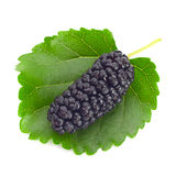 Black mulberry Royalty Free Stock Image