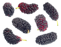 Black mulberry fruit set Stock Photo