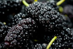 Black mulberry juicy sweet and tasty close-up shot.  Royalty Free Stock Photography