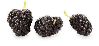 Black mulberry on the white background royalty free stock image