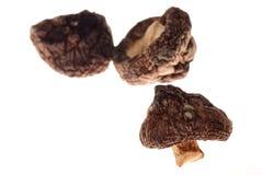 Black mushroom Royalty Free Stock Images