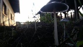 Black mushrooms stock image