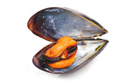 Black mussel. Close up on white background Stock Images