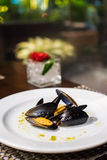 Black mussel. S on the white plate Stock Photos