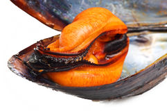 Black mussels Stock Image