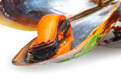 Black mussels Royalty Free Stock Photos