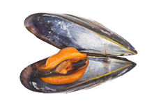 Black mussels Royalty Free Stock Image
