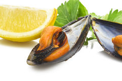 Black mussels Royalty Free Stock Photography