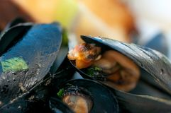 Black mussels with crispy bread on a plate royalty free stock photo