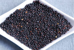 Black mustard seeds Stock Images