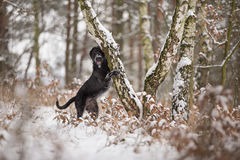 Black mutt dog outside in winter snow. Stock Photo