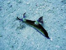 Black nadibrunch. In sand underwater Stock Photos