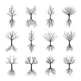 Black Naked Trees and Roots. Vector Illustration Stock Photo
