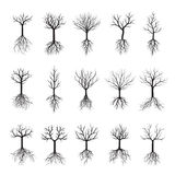 Black Naked Trees and Roots. Vector Illustration Stock Photos