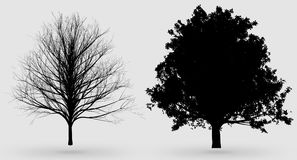 Black nature oak tree silhouettes Stock Photos