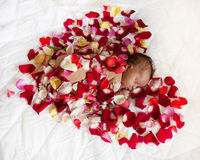 Black newborn baby in red heart. Black newborn baby princess sleeping in red flower petals like heart. Love concept Stock Images