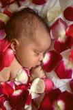Black newborn baby sleeping in flowers. Black newborn baby sleeping in flower`s petals Stock Photos