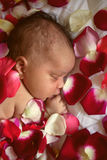 Black newborn baby sleeping in flowers Stock Photos