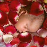 Black newborn baby sleeping in rose petals. Black newborn baby sleeping in rose flower petals,  closeup Royalty Free Stock Photos