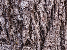 Black nut tree texture Stock Photos