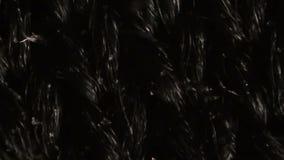 Black nylon mesh cloth fibers under the microscope stock video