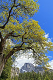 Black Oak Arch and Half Dome Stock Photography
