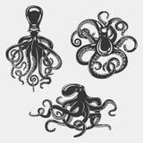 Black octopus or underwater swimming mollusk Stock Photos