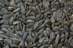 Black Oil Sunflower Seeds Stock Images
