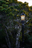 Black Old Fashioned Lamp Post In Nature. Black old fashioned lamp post in front of a forest. The light inside the lamp is on Stock Image