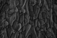 Free Black Old Pine Tree Bark Texture Close Up Stock Image - 184204481