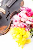 Black old violin. With tulips on white Stock Images