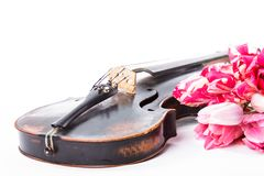 Black old violin. With tulips on white Royalty Free Stock Photography