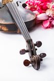Black old violin. With tulips on white Royalty Free Stock Image