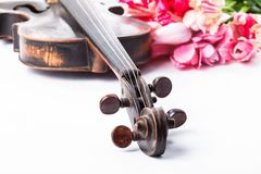 Black old violin. With tulips on white Royalty Free Stock Photos