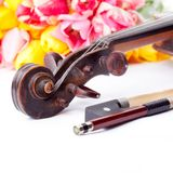 Black old violin. Part of black violin and .fiddlestick with tulips on white Stock Image