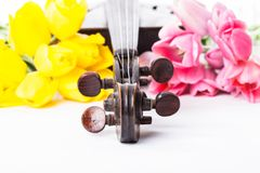 Black old violin. Part of black violin and .fiddlestick with tulips on white Stock Photography