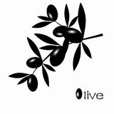 Black Olive Royalty Free Stock Photography