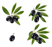 Black olive Stock Photos