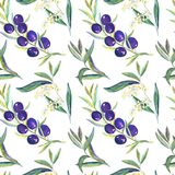 Black Olive branches with fruits, flowers and leaves. Black olive branches with leaves, flowers and fruits, seamless pattern design, on white background, hand stock illustration