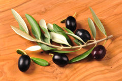 Black olive fruits. Olive branch with black olives Royalty Free Stock Photos