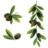 Black olive set Stock Photography